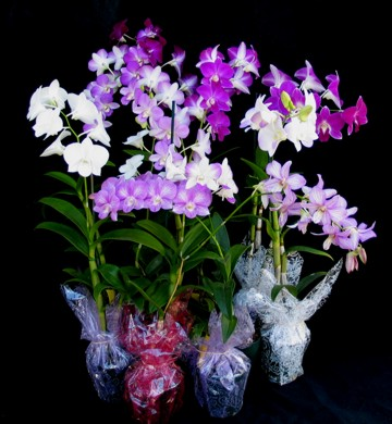 Buy 20 Assorted Color Orchid Centerpieces
