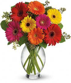 Buy Teleflora's Gerbera Brights Bouquet