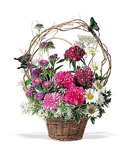 Buy Teleflora's Butterfly Basket