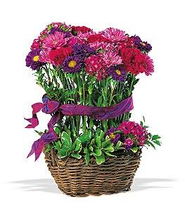 Buy Teleflora's Topiary Basket