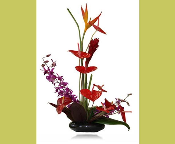 Buy Hilo Flowers
