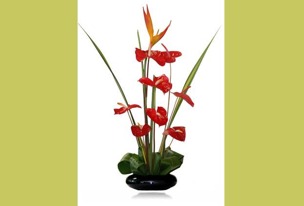 Buy Aloha Flowers