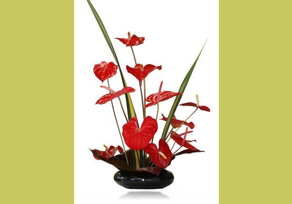Buy Aloha Nui Flowers