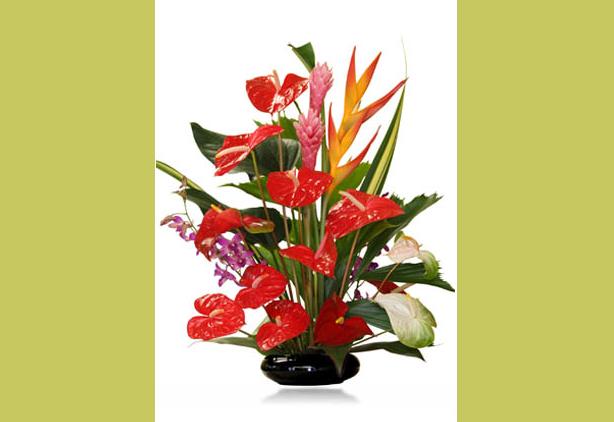 Buy Island Tropicals Flowers