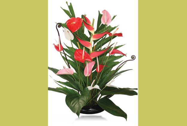 Buy Nohea Lovely Flowers