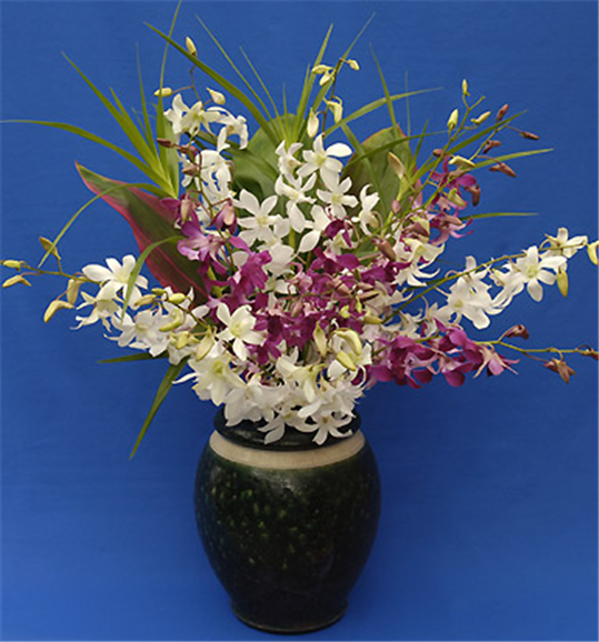 Buy One Dozen Dendrobium Orchid Sprays And Foliage Вouquet