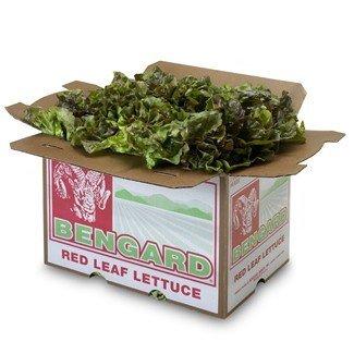 Buy Red Leaf Lettuce