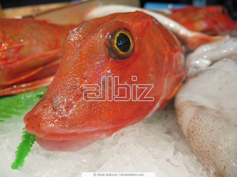 Buy Sauteed Diver Sea Scallops