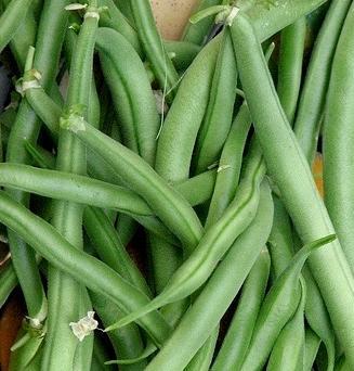 Buy Bush Bean Seed - 2oz Bag