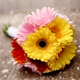 Buy Gerbera Daisy Bouquet