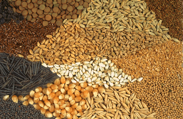Buy Seeds