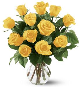 Buy 12 Yellow Roses