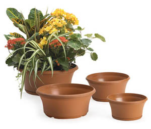 Buy Panterra Bowls