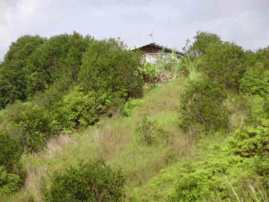 Buy County of Hawaii, North Hilo District Upper Maulua Homesteads
