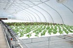 Buy Greenhouse Structure