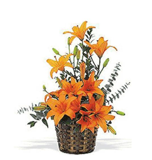 Buy Opulent Orange Basket