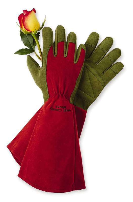 Buy Rose Gloves