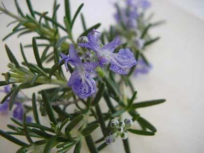 Buy Botanical Teas