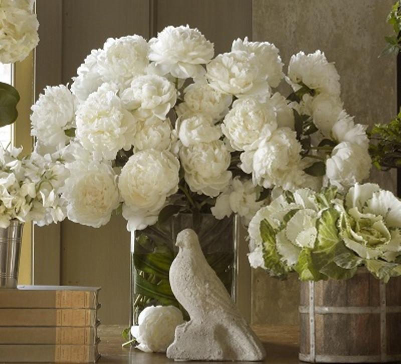 Superb White Peonies; More