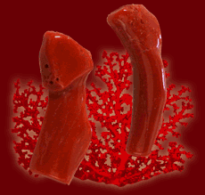 Buy Red Coral