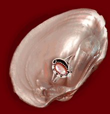 Buy Pink mussel shell