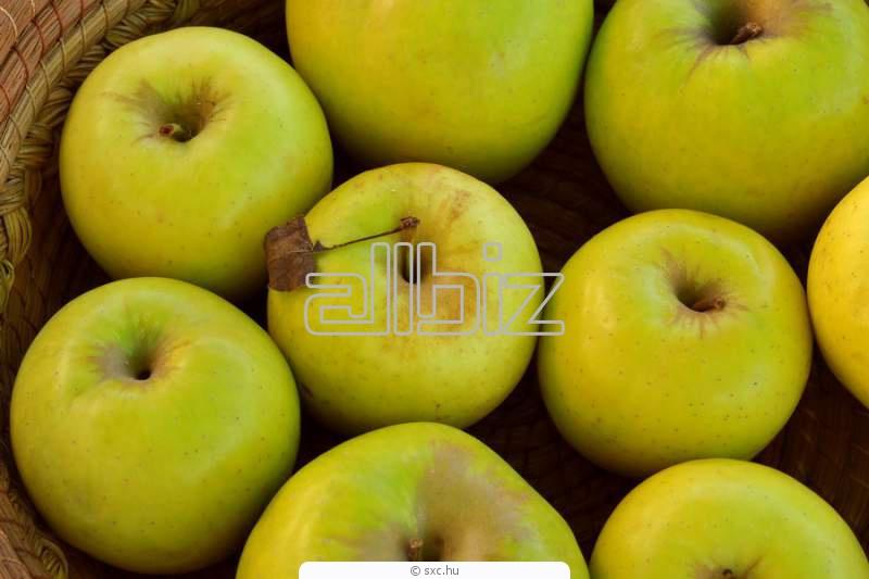 价格小果实的苹果 在 世界市场