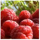 Buy Raspberry Infused Balsamic Vinegar
