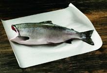 Buy Alaska Salmon