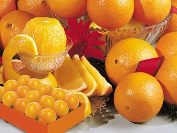 Hale Navel Oranges
