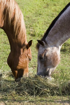 Buy SmartLic MenthoLic® Horse Supplement