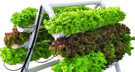 Buy U-Gro 60 Hydroponic Garden System
