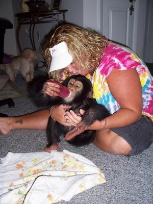 Buy Male And Female Chimpanzee Monkeys For Sale.