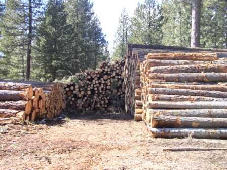 Buy Timber 4x1,2x2,3x2,5x2 4.8 meter lengths job lot and many others