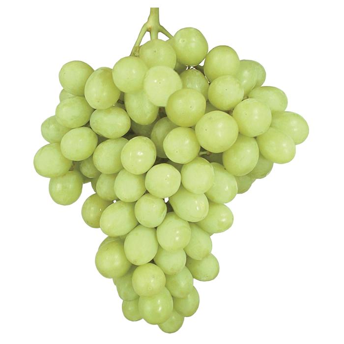 Buy Autumn King Grapes