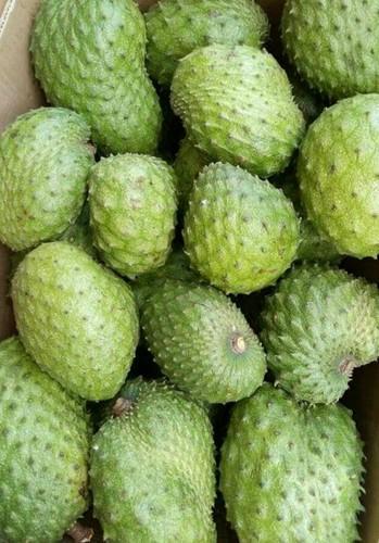 Buy FRESH SOURSOP FRUIT/ GRAVIOLA FRUIT
