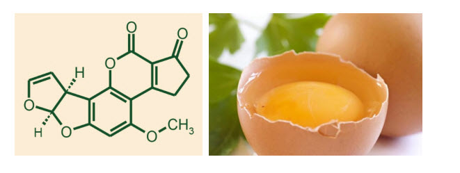 A method of producing chicken yolk antibodies to aflatoxin B1 PP049