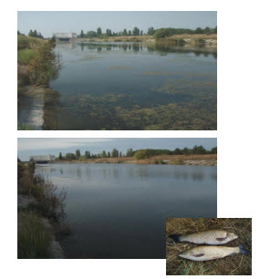The introduction of bio melioration innovative technologies on water bodies of general use to improve the  water resources quality of Ukraine PP255
