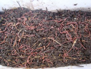 Buy Biotechnology of recycling organic waste by vermicultural method PP057