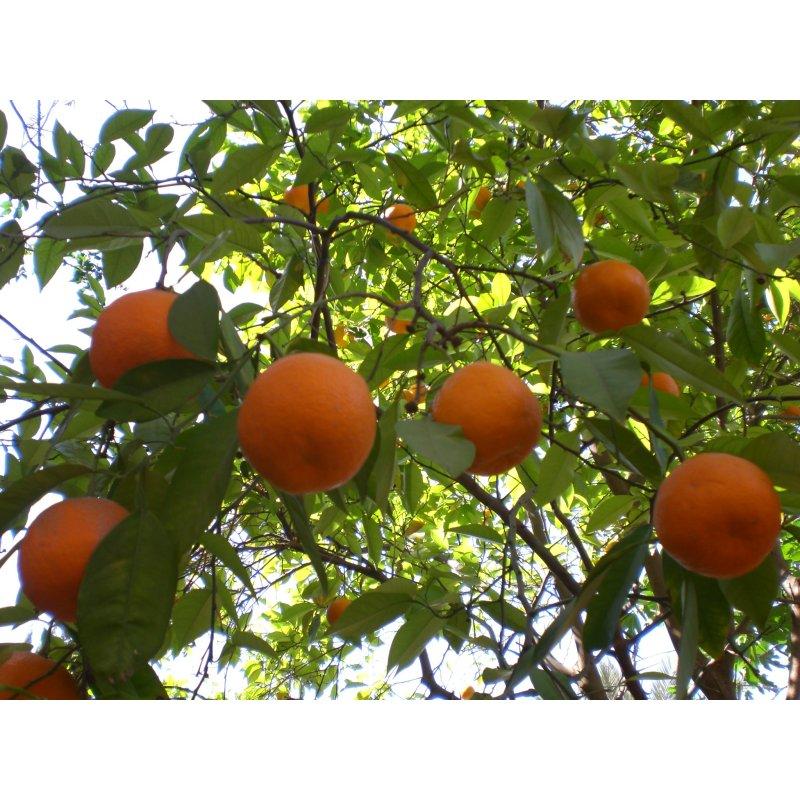 Buy Fruit Trees