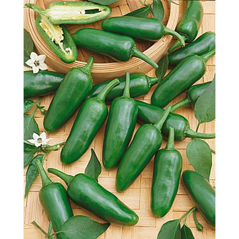 Buy Jalapeno Pepper Seeds