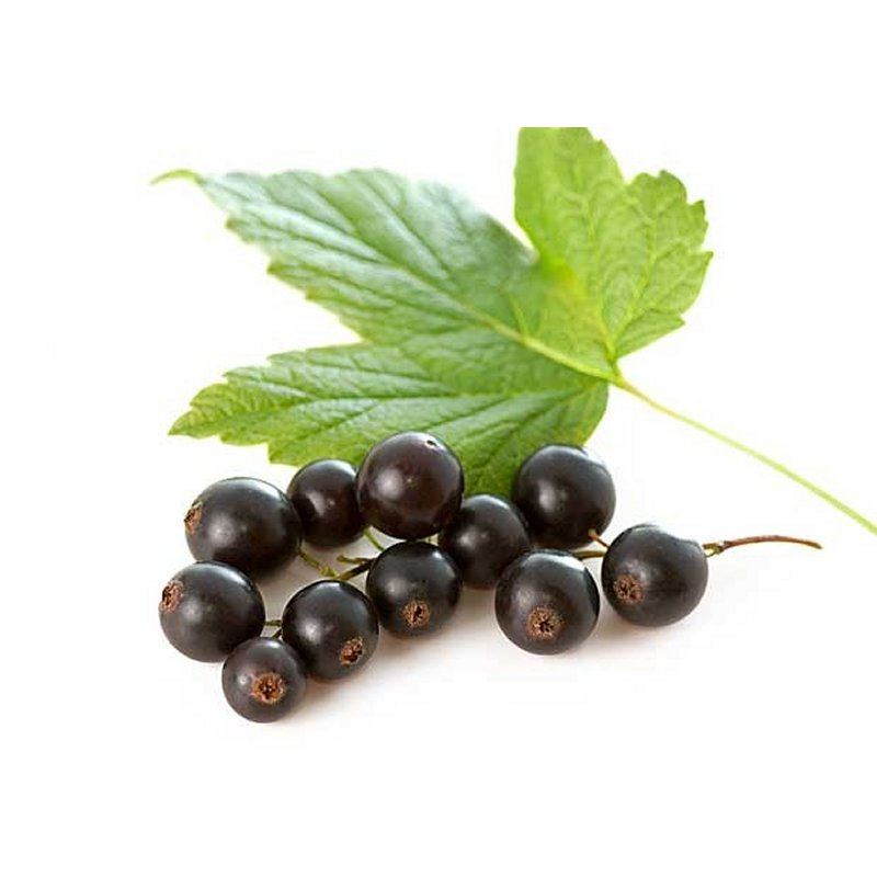 Buy Fruit Seeds & Plants