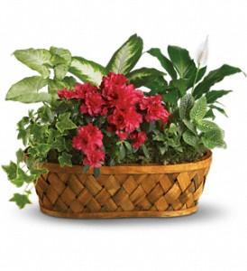Buy Plants Galore Basket