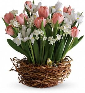 Buy Tulip Song