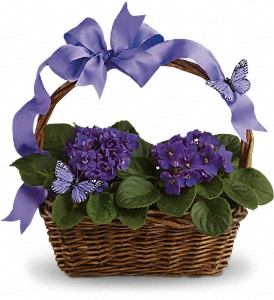 Buy Violets And Butterflies