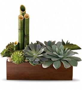 Buy Teleflora's Peaceful Zen Garden