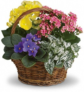 Buy Spring Has Sprung Mixed Basket