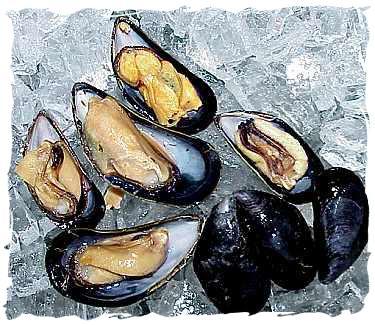 Buy Frozen Half Shell Mussels