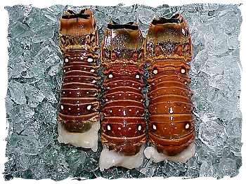 Lobster Tails (2-3 oz.)