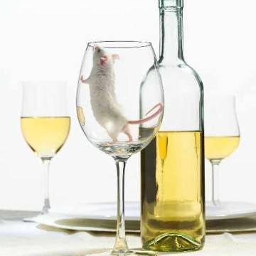 Buy Wine Seyval Blanc 2007