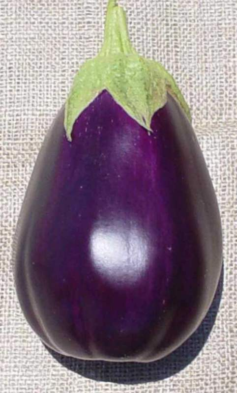 Buy Eggplant, Black Beauty
